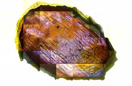 Stone Age of Biology